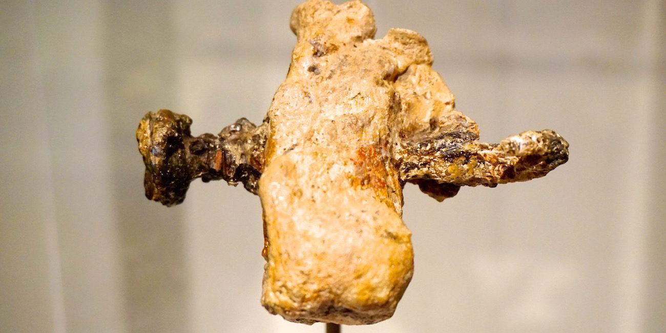 Artifacts Cruxifixion Nail Bone Israel Museum Jerusalem