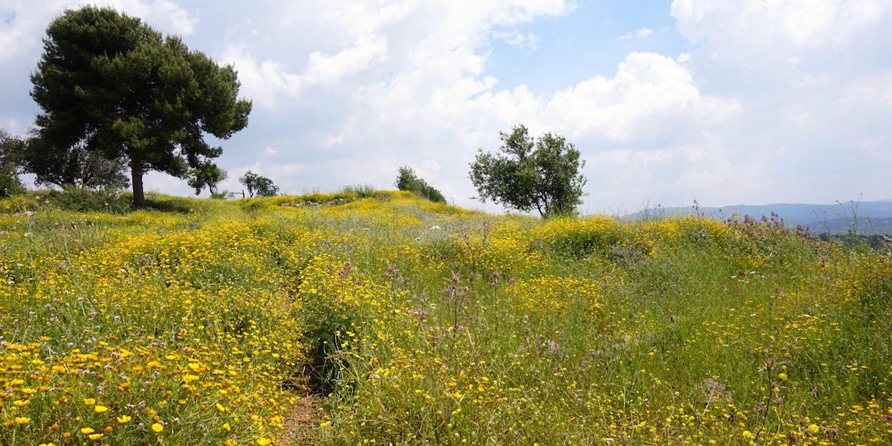 Field Israel