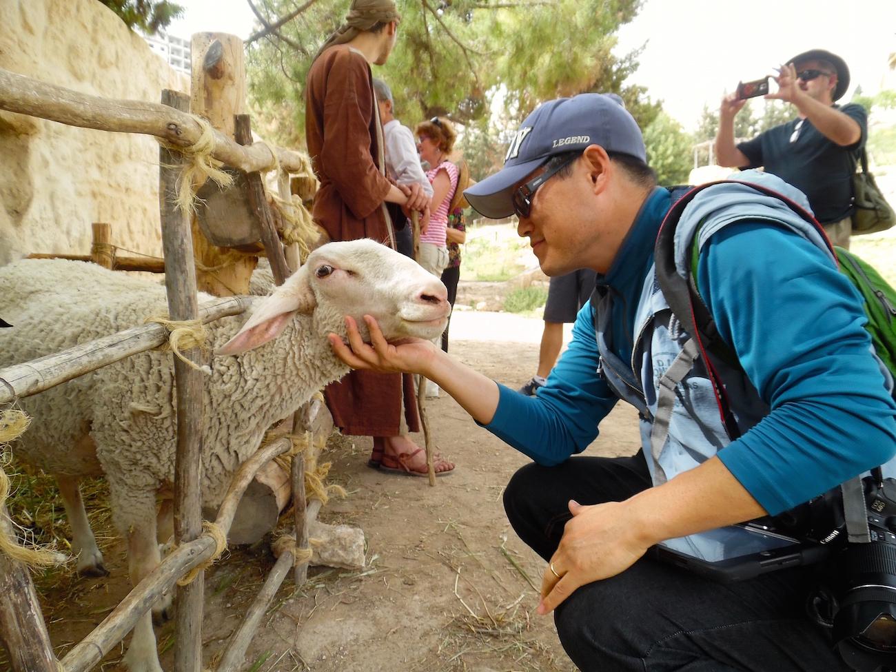 Student Field Trip Sheep