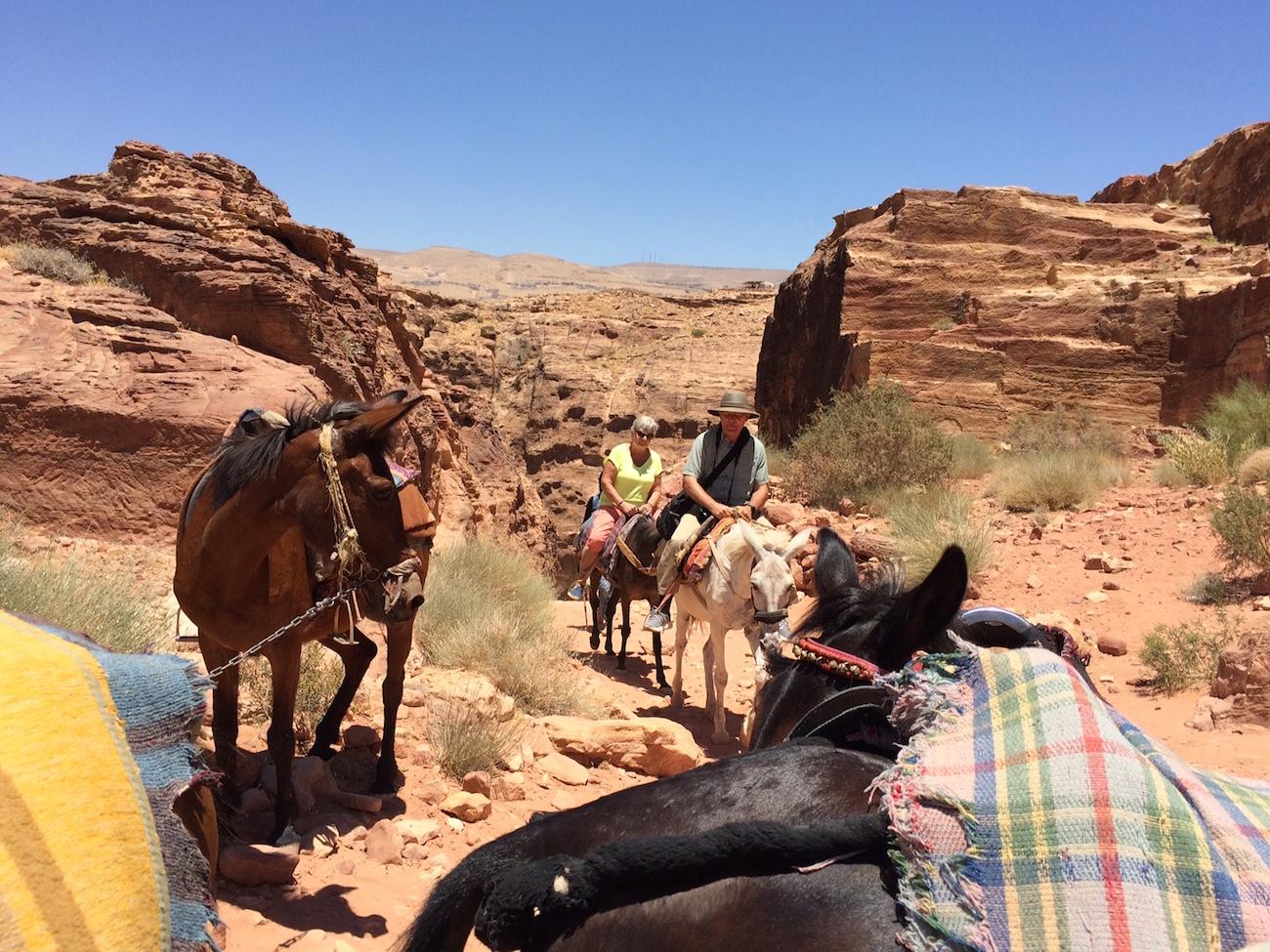 Student Jordan On Donkey 3
